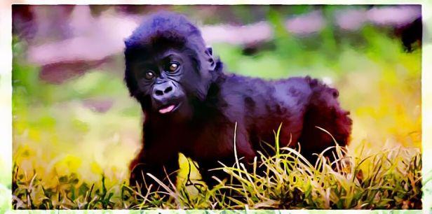 GorillaPoachingTwo6